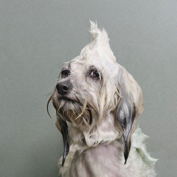 Sudsy Puppy Photography
