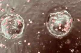 Growing Stem Cells with a Plastic Toy