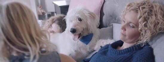 Emotional Pet Rescue Ads