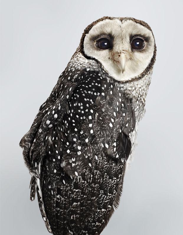 Posing Bird Portraits