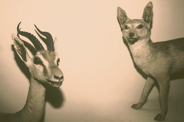 Artsy Taxidermic Photography
