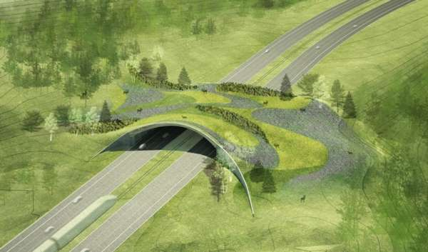 Animal Overpasses