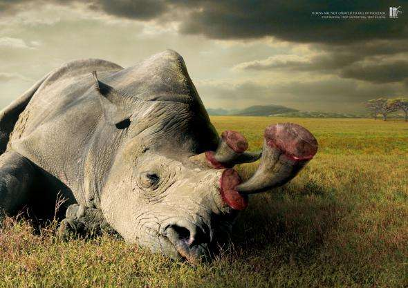 Brutal Wildlife Campaigns