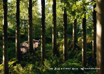 Tree-Barred Animal Sanctuary Ads