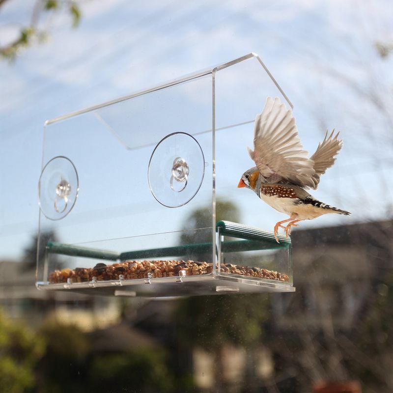 See-Through Window Birdhouses