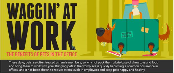 Office Pet Infographics