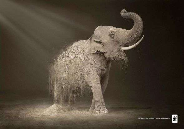 Disintegrating Animal Advertising