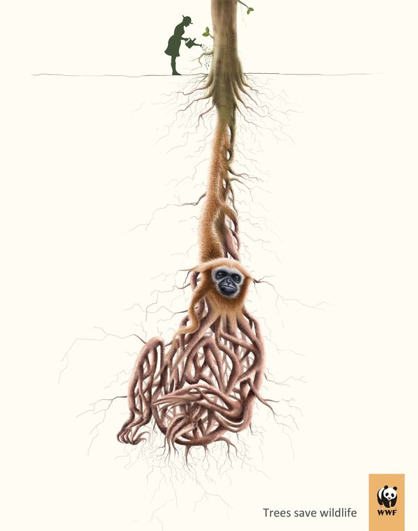 Rooted Animal Ads