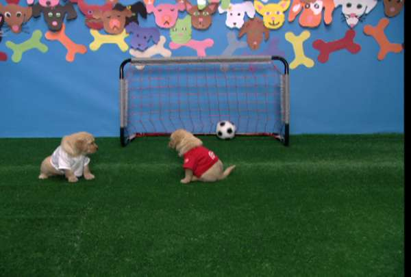 Doggy Daycare DVD
