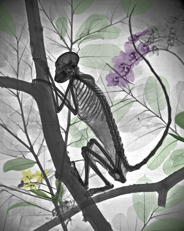 X-ray Nature Photographs