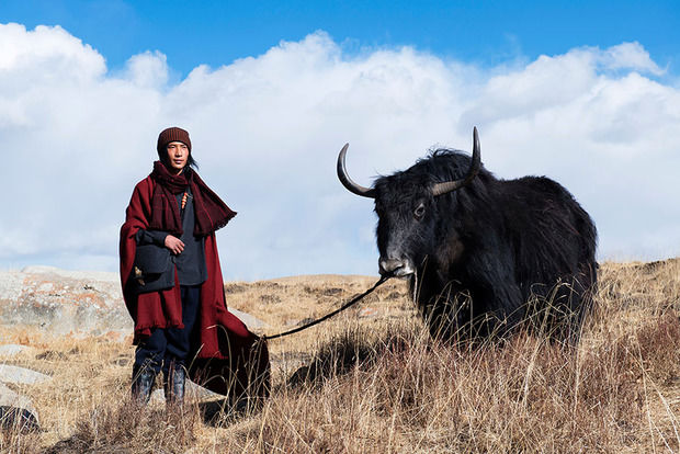 Yak Wool Fashion
