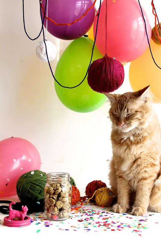 Funky DIY Feline Toys