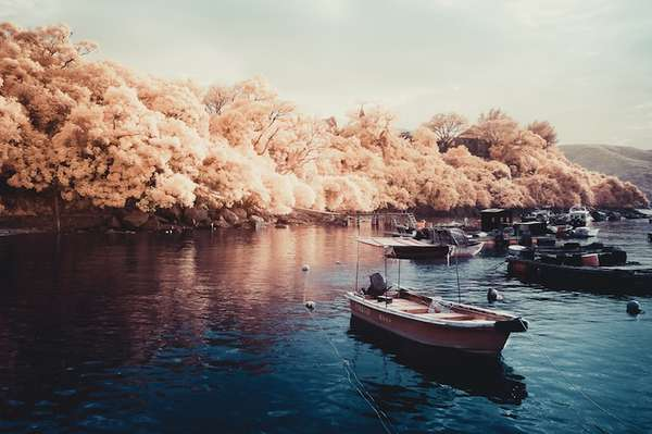 Yiu Yu Hoi Infrared Photos