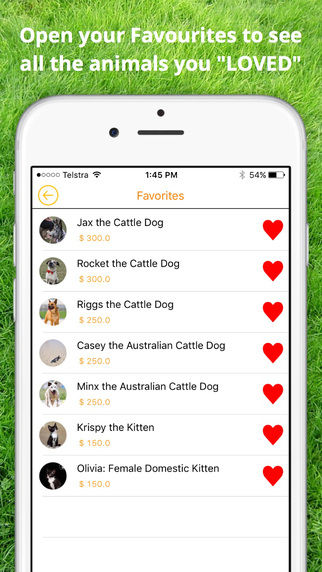 Pet Adoption Apps