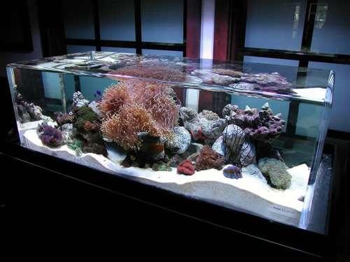 Infinity Aquariums