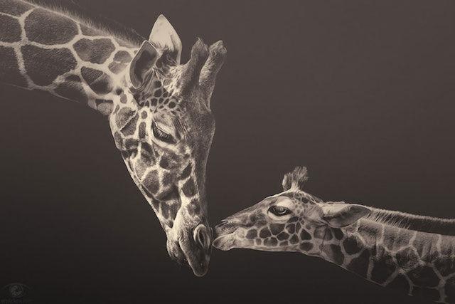 Zoo Animal Photography