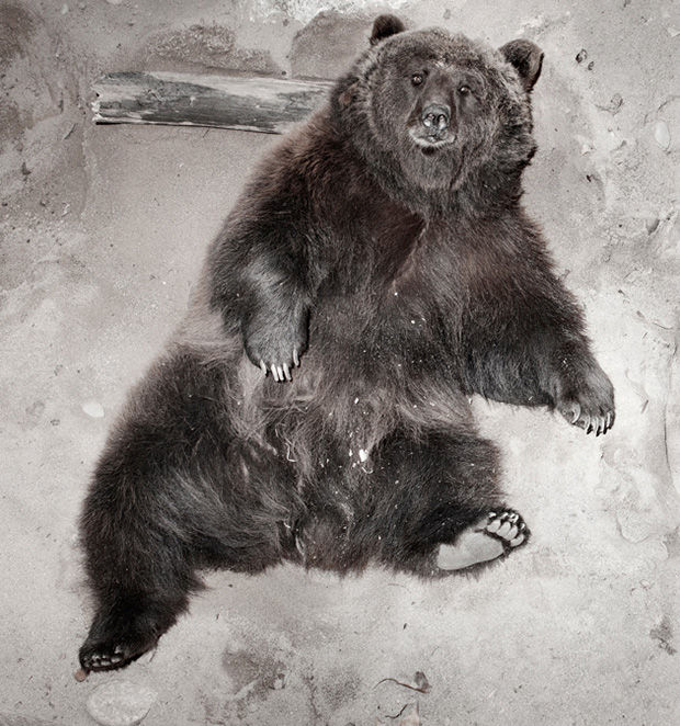 Haunting Zoo Animal Portraits