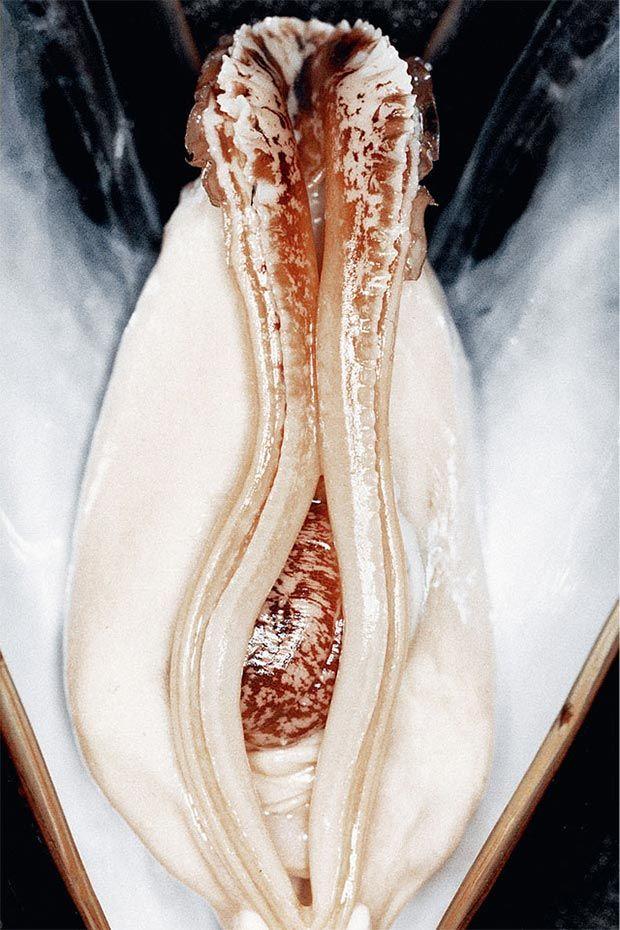 Genitalia-Mimicking Food Photos
