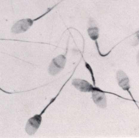 Women Could Make Sperm