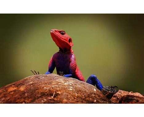 47 Examples of Lizard Love