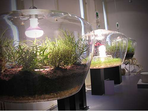 Illuminating Plant Habitats