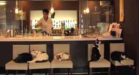 Pet Store Cafes