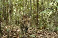 Camera-Trap Photography