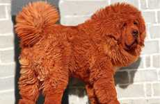 Million Dollar Puppies - The Red Tibetan Mastiff is One Expensive Dog