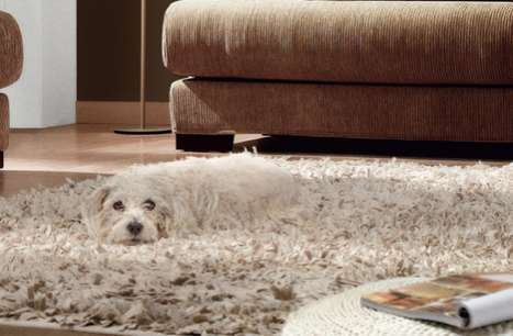 Canine-Concealing Campaigns