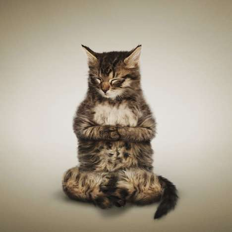 Daniel Borris' Yoga Kitten Series is Cute and Full of Zen