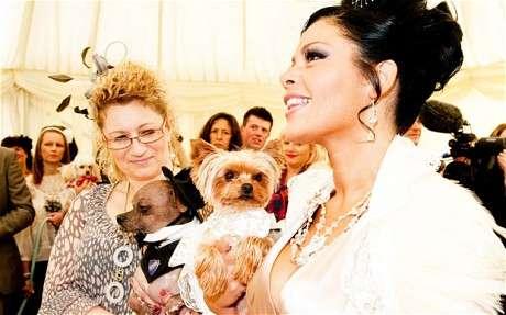 Lavish Canine Nuptials