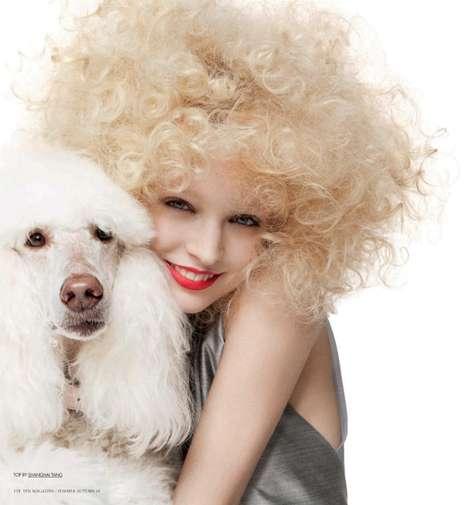 Poodle Pouf Photography