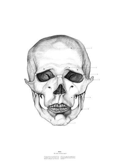 The Anatomy of Skulls Series Showcases Famous Characters Sans Flesh