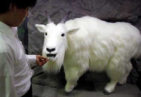 Fake Animal Eats Losing Stubs - Japanese Robo-Goat Reduces Litter
