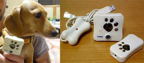 Camera Your Pet Wears