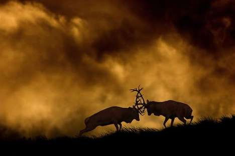 Atmospheric Animal Photography