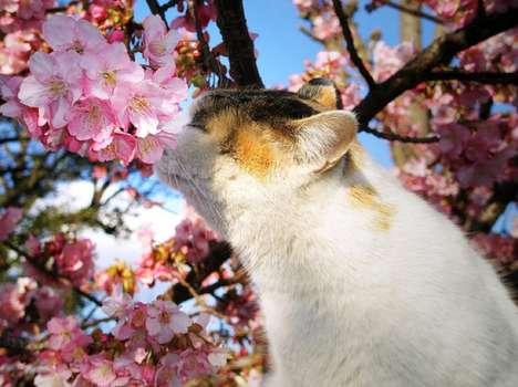 Feline Flower Photo Shoots