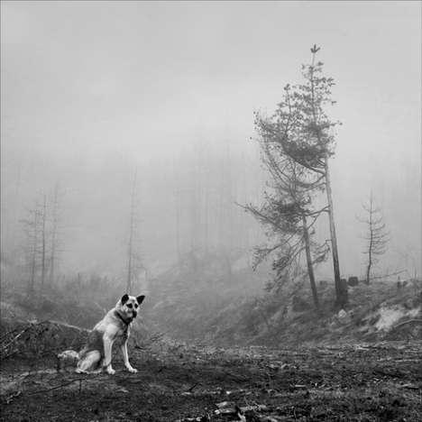 Gloomy Photo Galleries