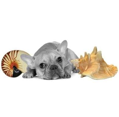 Shell-Tastic Pet Playthings