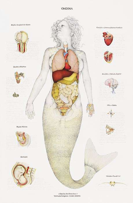Scientifically Mythical Illustrations