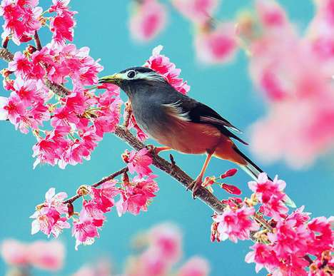 John & Fish Photography Boasts Beautiful Birds and Blossoms