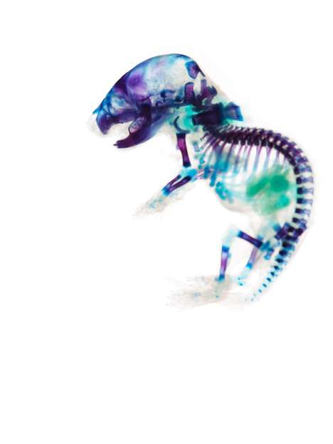 Transparent Animal Visuals