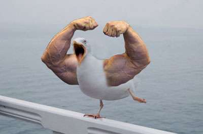 Hilarious Avian Mash-Ups - 'Birds With Arms' is Exactly What the Title Says