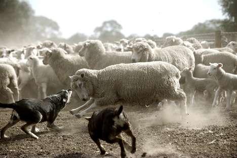 Outback Farmstead Photography