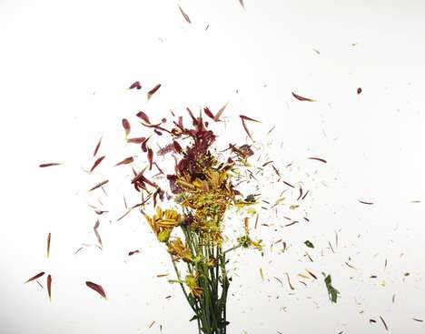 Floral Explosion Photography