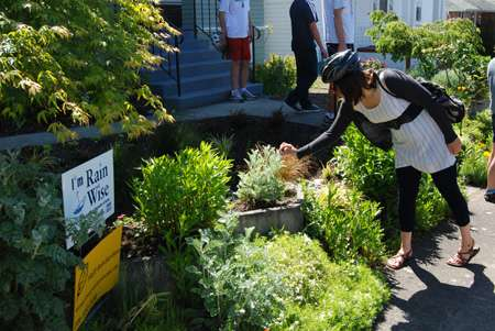 Reinvented Landscapes - 12,000 Rain Gardens Campaign Builds Habitat and Protects Puget Sound