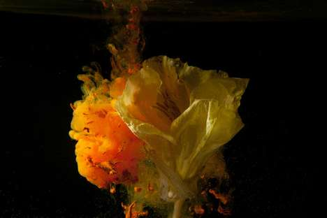 Exploding Flower Photography