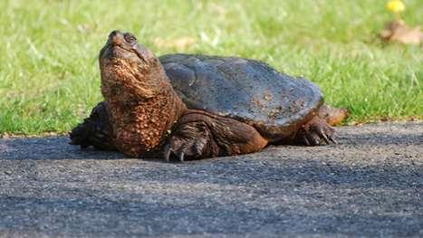 Tweeting Tortoises