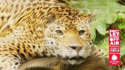 Fuzzy Animal Ads