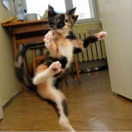 Sassy Pussycat Photoblogs